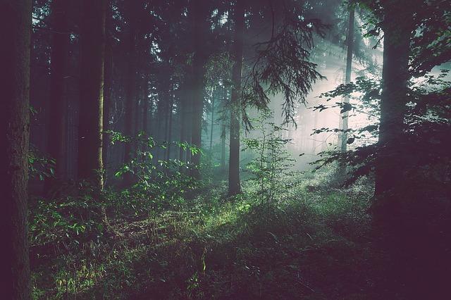 foggy-1081915_640